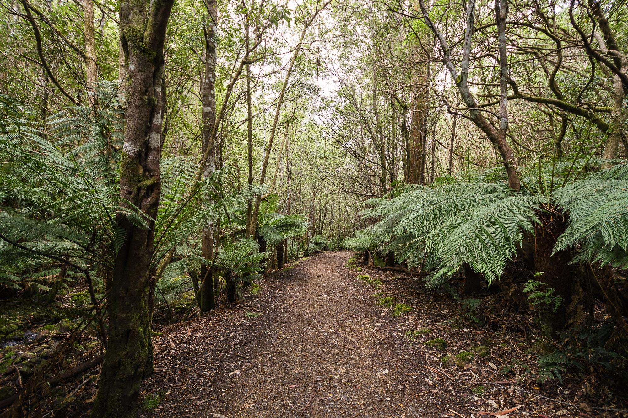 Bushwalking in Tasmania